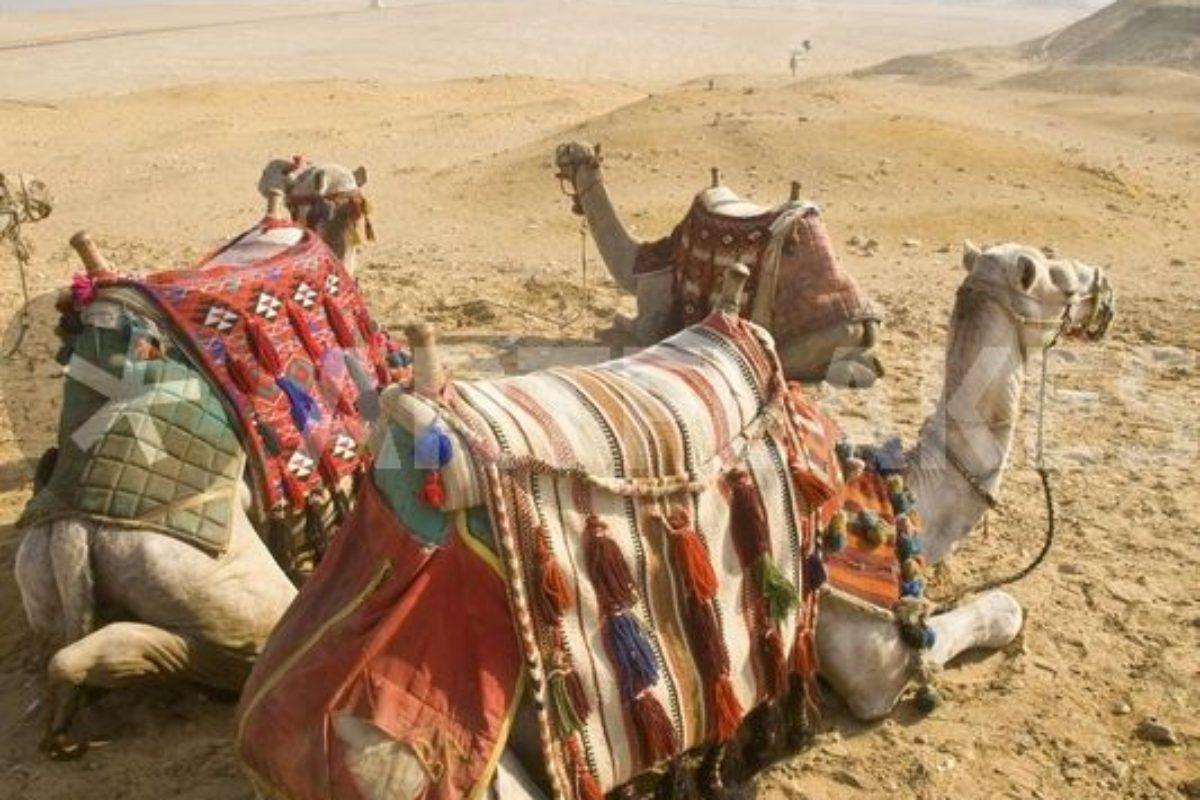 Dovolenka Egypt a Tunisko sú momentálne najžiadanejšie